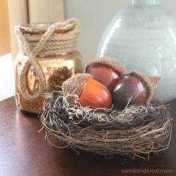 Acorns in a Nest Thumbnail
