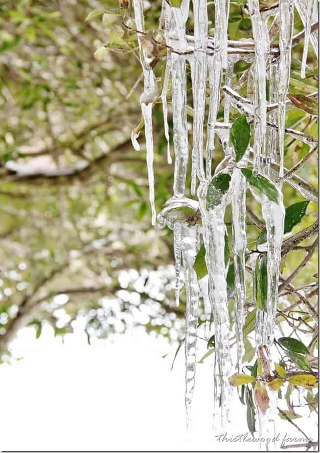 ice-thistlewood_thumb.jpg