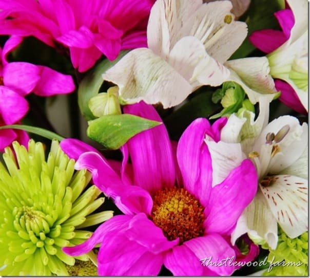 flowers-spring