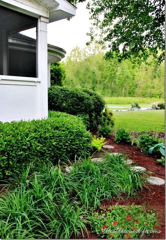 garden-day-lilies