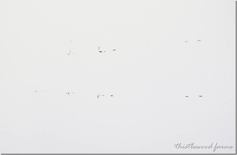 white-wall
