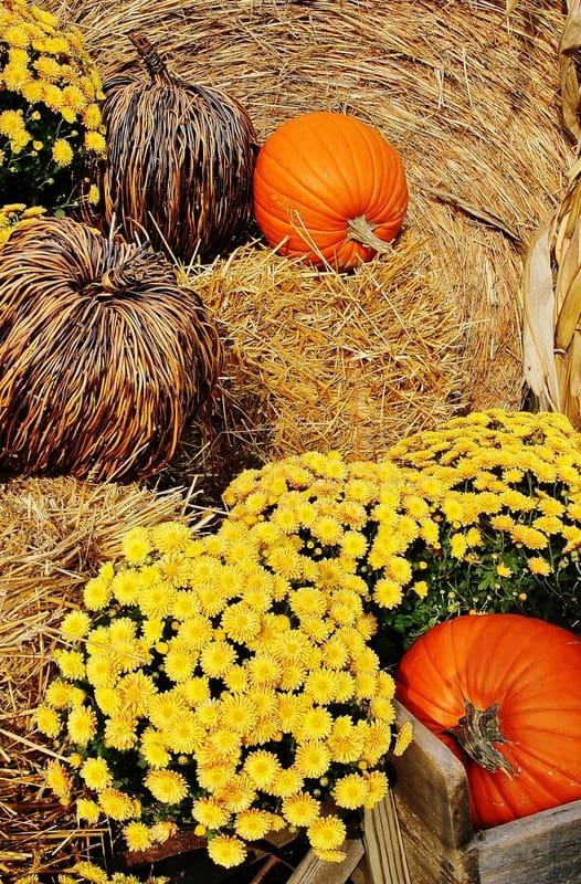Fall_Farm