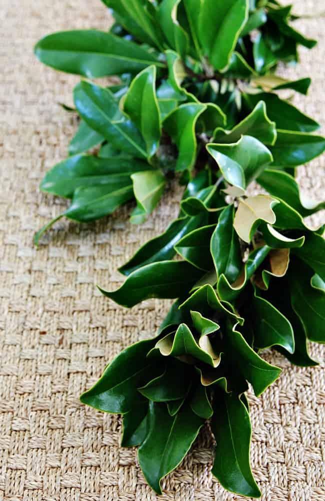 magnolia leaf garland diy